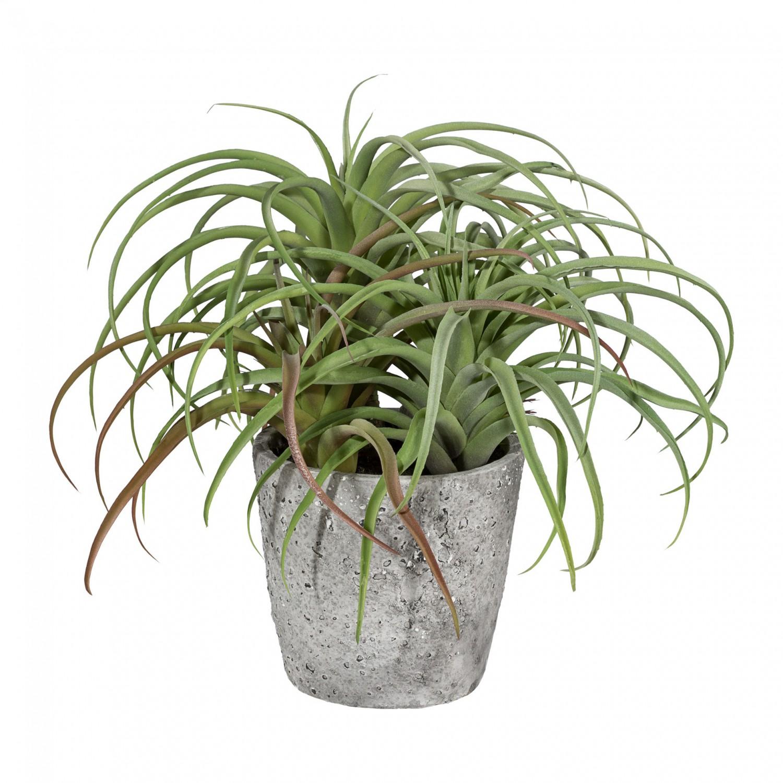 Tillandsie Kunstpflanze 33 cm im Zementtopf