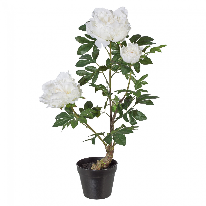 Pfingstrose mit 3 Blüten Kunstpflanze 70 cm in weiß