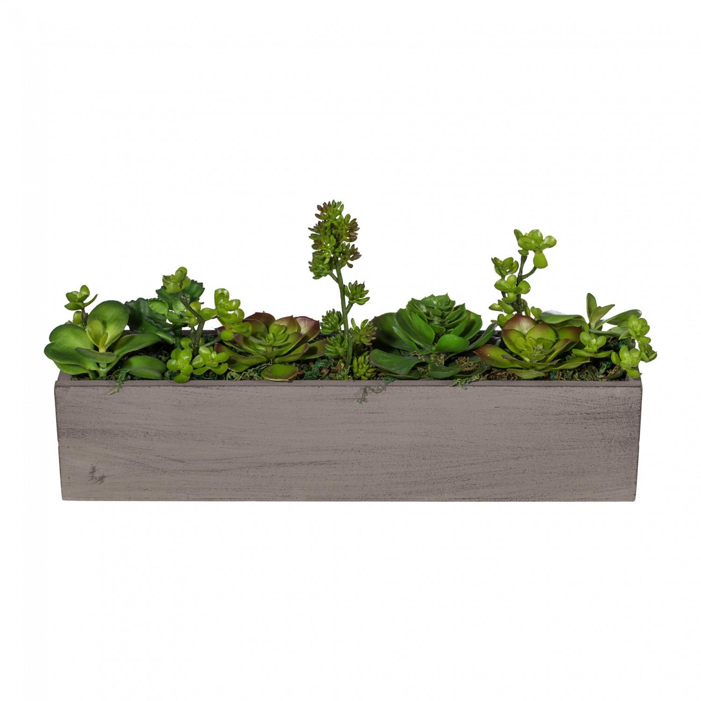 Raumteiler mit Sukkulenten im grauen Holzkasten 60 cm
