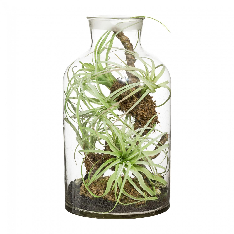 tillandsien arrangement kunstpflanze 43 cm im glas ebay