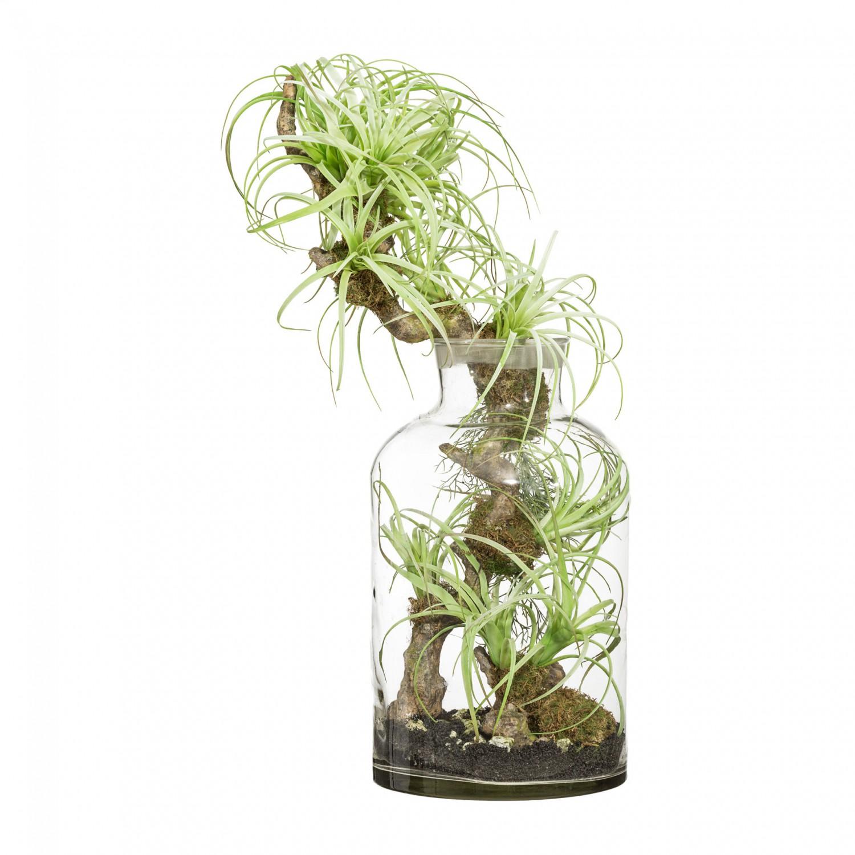 Tillandsien-Arrangement Kunstpflanze 73 cm im Glas