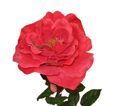 k nstliche rose farbe pink 70cm kunstpflanzen bl hende pflanzen. Black Bedroom Furniture Sets. Home Design Ideas